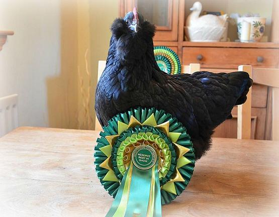 cleo RBIS with rosettes.jpg